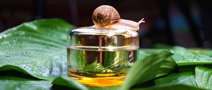 Best Korean Snail Cream